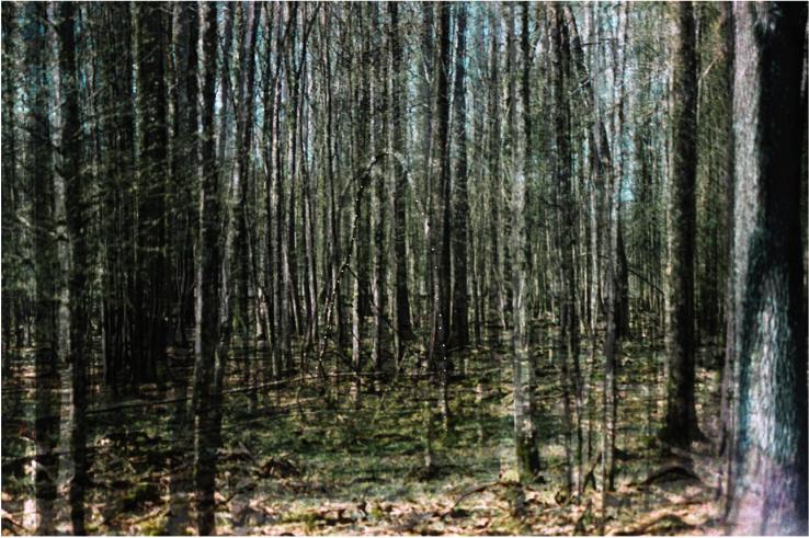 L'ÉCHINE DES ANIMAUX DISPARUS 1 - Léa Bailleux 100x66 cm. Superspostions de tirages argentiques imprimés sur papier Kodak Translucent, percés et montés sur caisson lumineux